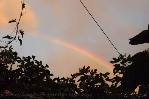 rainbowmoar