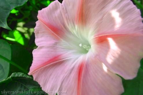 mf-pinkflowermanip