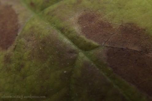 avocado-7